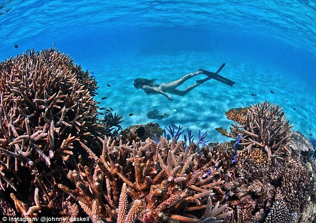 Rite On Great Barrier Reef Fake Science