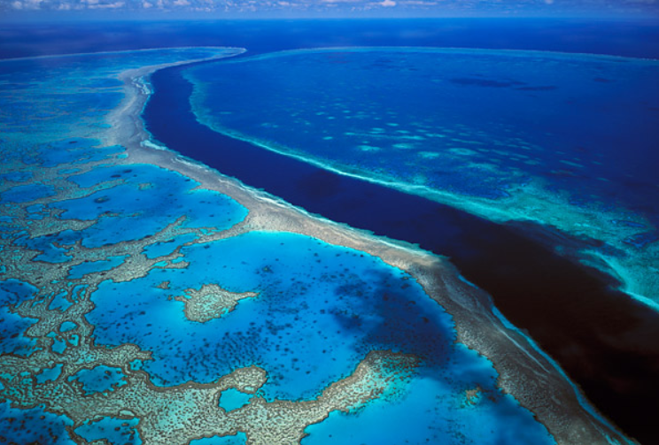 Rite-On Reef Scare Fake Science