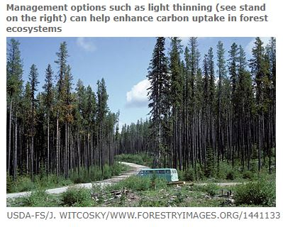 light thinning is a management option for bushfires